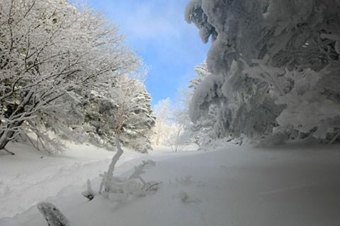 蓼科山 スズラン峠