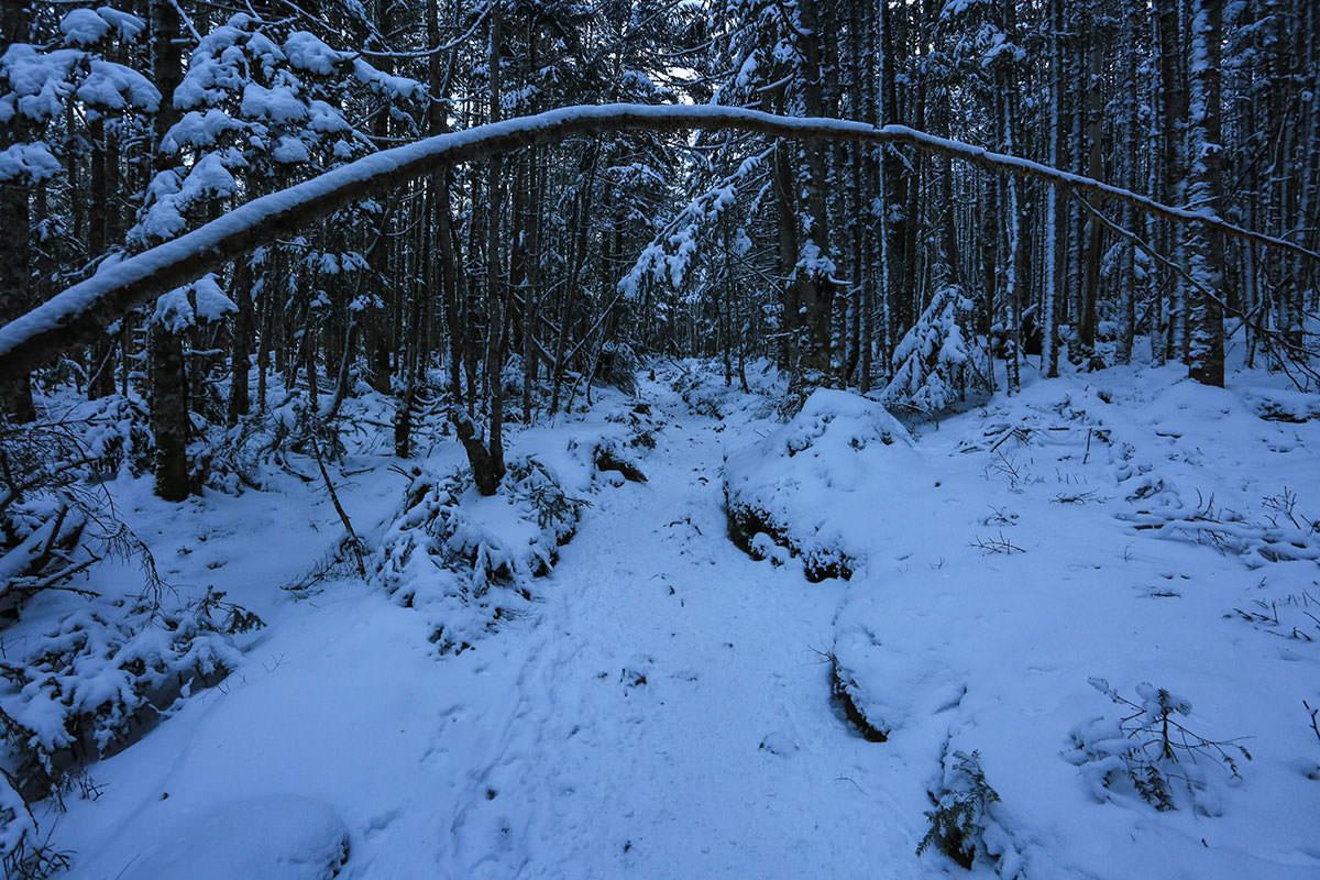【赤岳】登山百景-樹林帯を進む