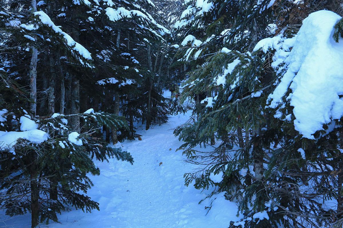 【赤岳】登山百景-樹林帯が続く