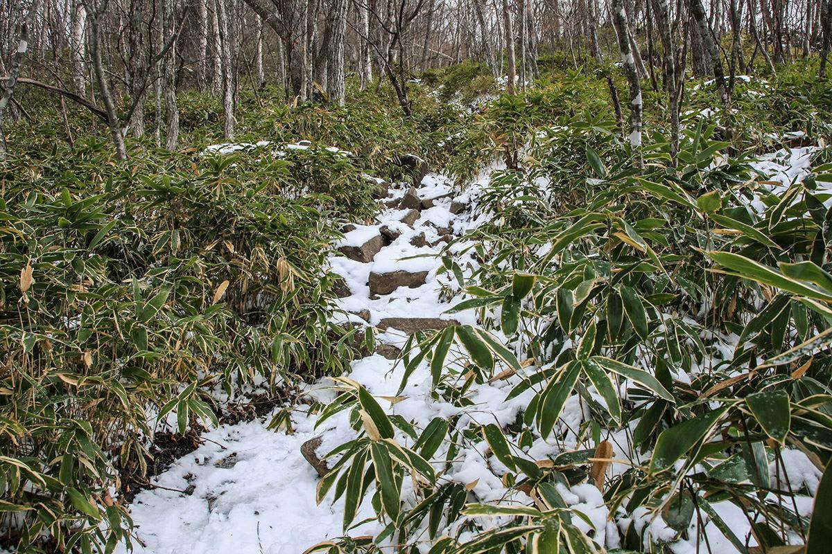 【赤城山】登山百景-笹がたくさん