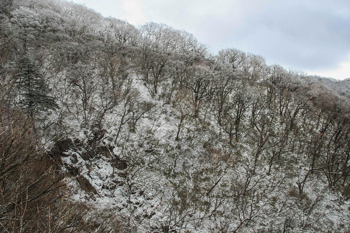 【赤城山】登山百景-霧氷