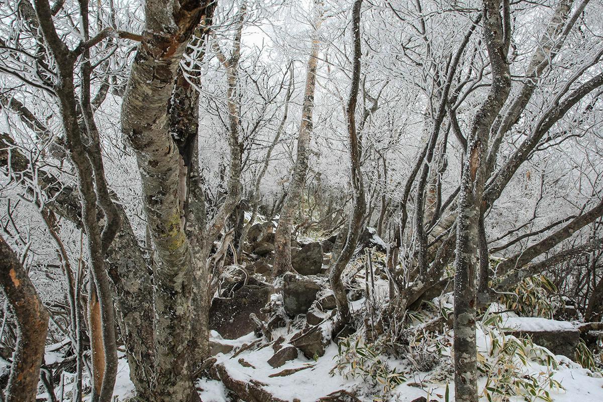 【赤城山】登山百景-白い