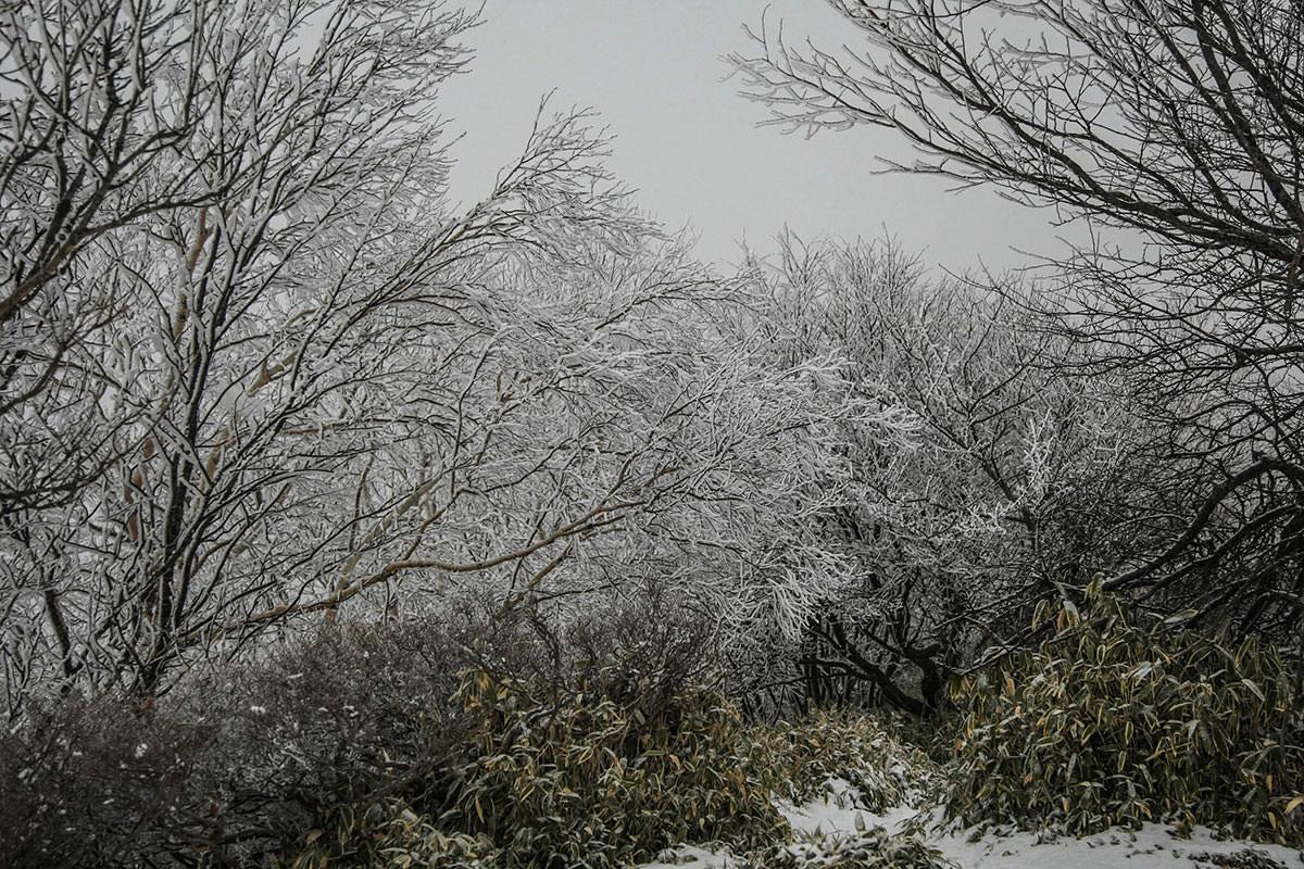 【赤城山】登山百景-霧氷に囲まれる