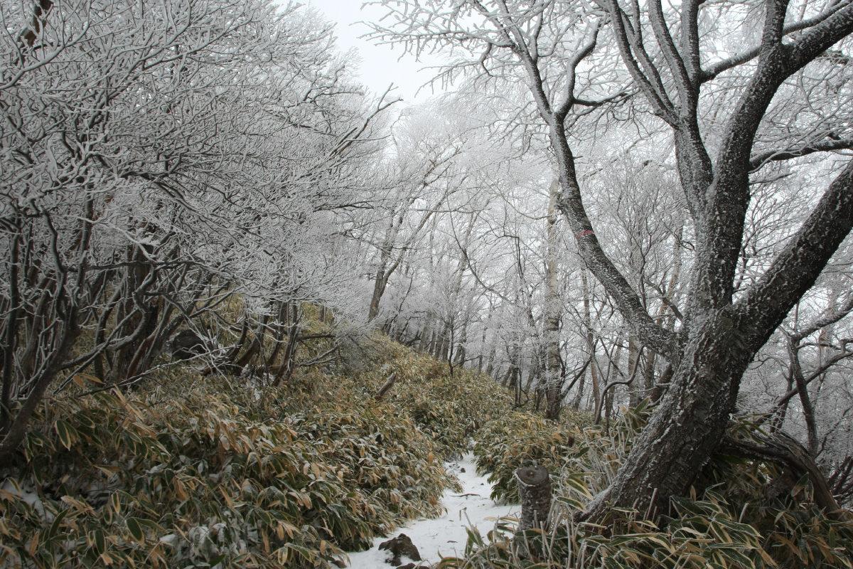 赤城山の霧氷