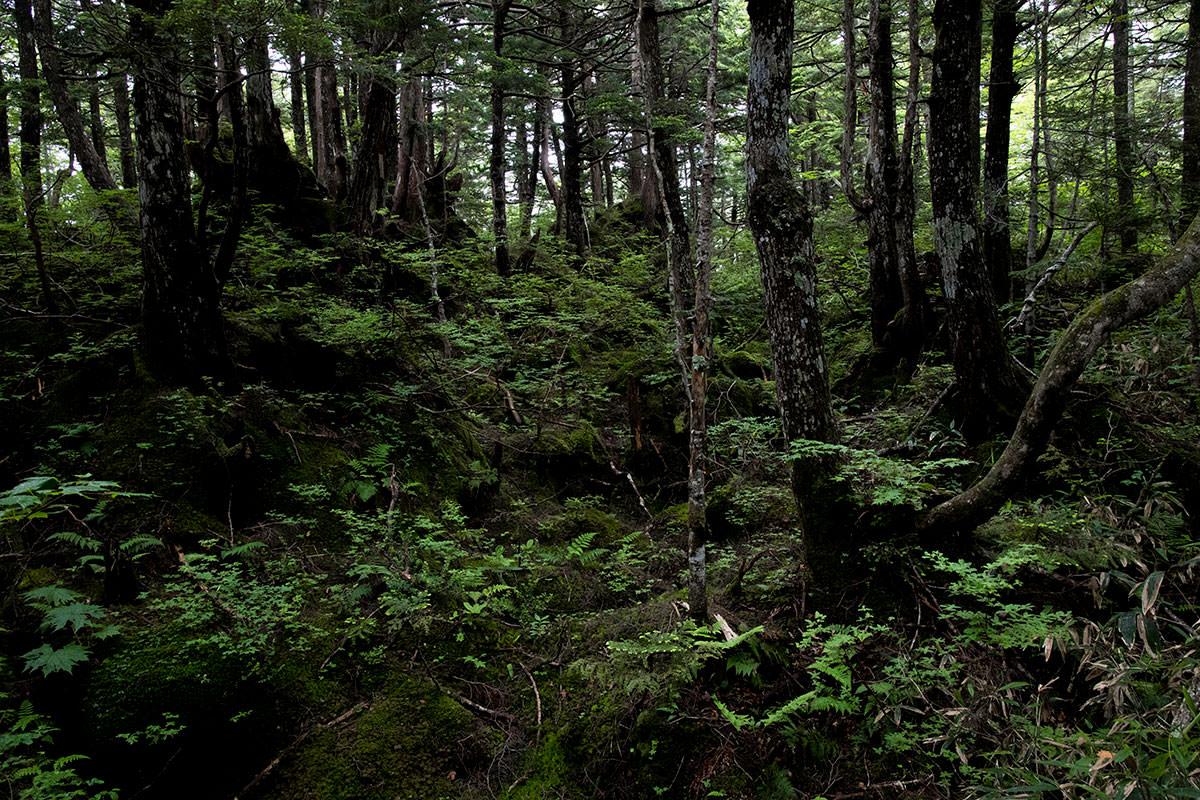 志賀高原赤石山-雨が多くて植物には良さそう