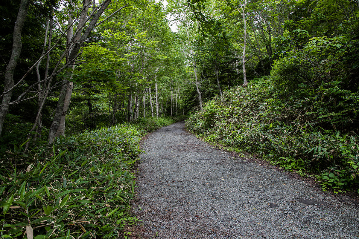 志賀高原赤石山-しばらく林道を歩く