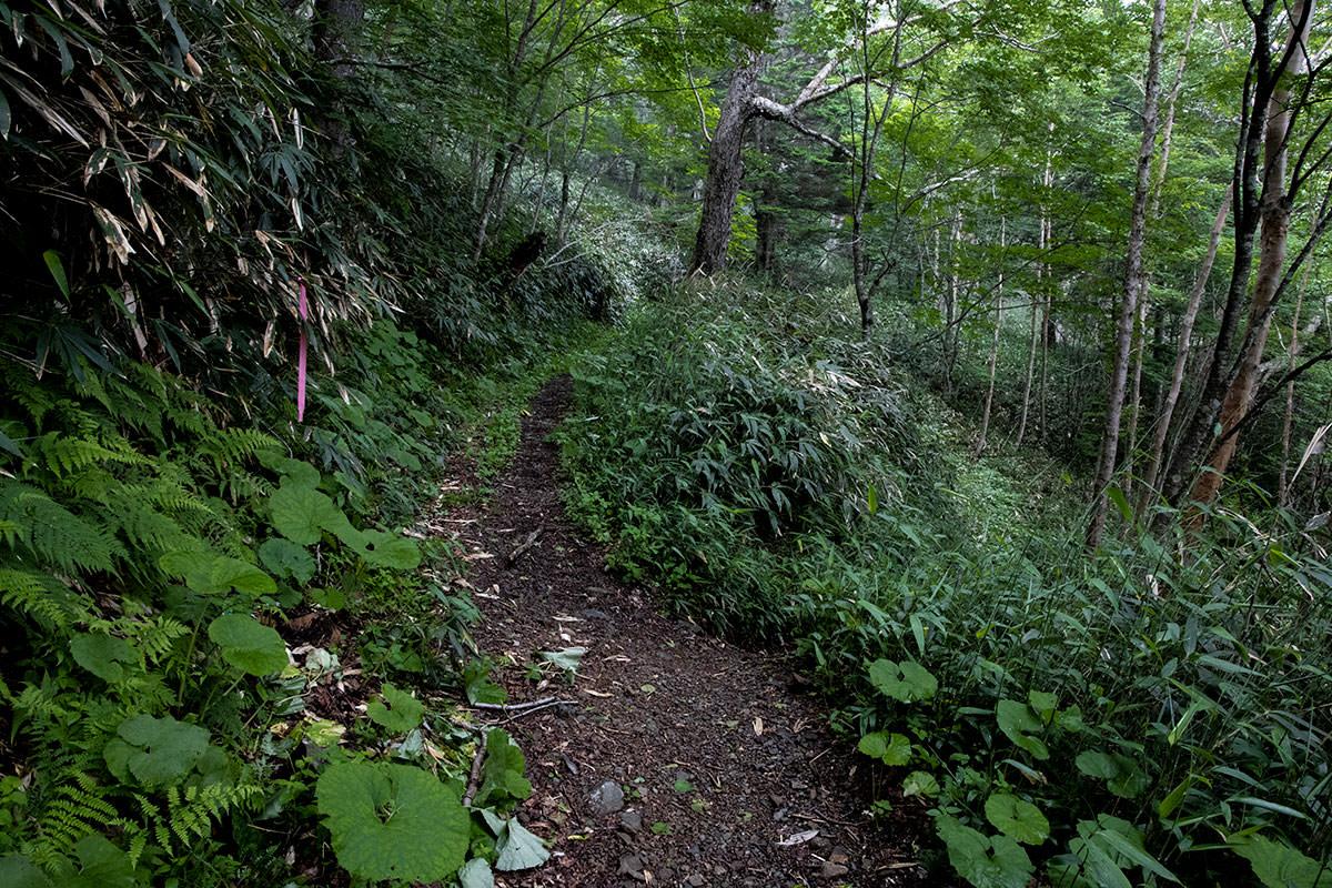 志賀高原赤石山-右へ下りたらレストハウス