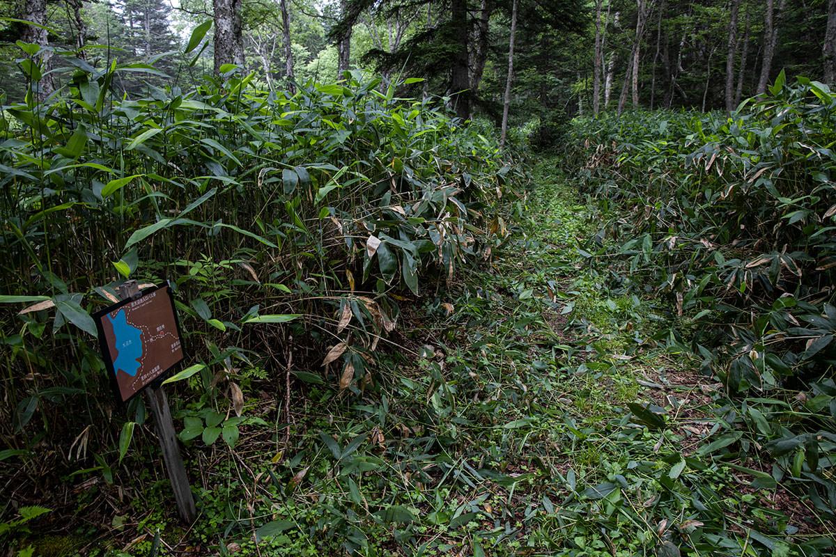 志賀高原赤石山-真っ直ぐ進んで赤石山と大沼池の分岐