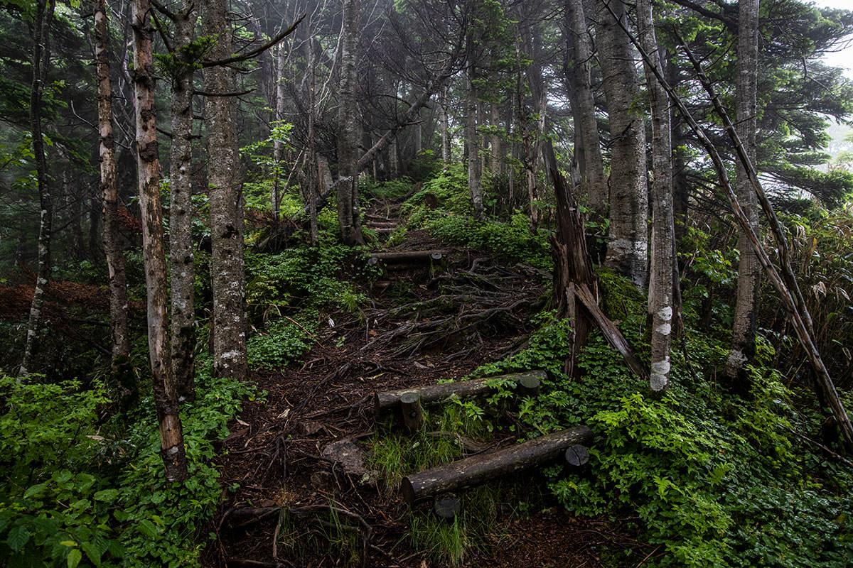 志賀高原赤石山-雨の中を登っていく