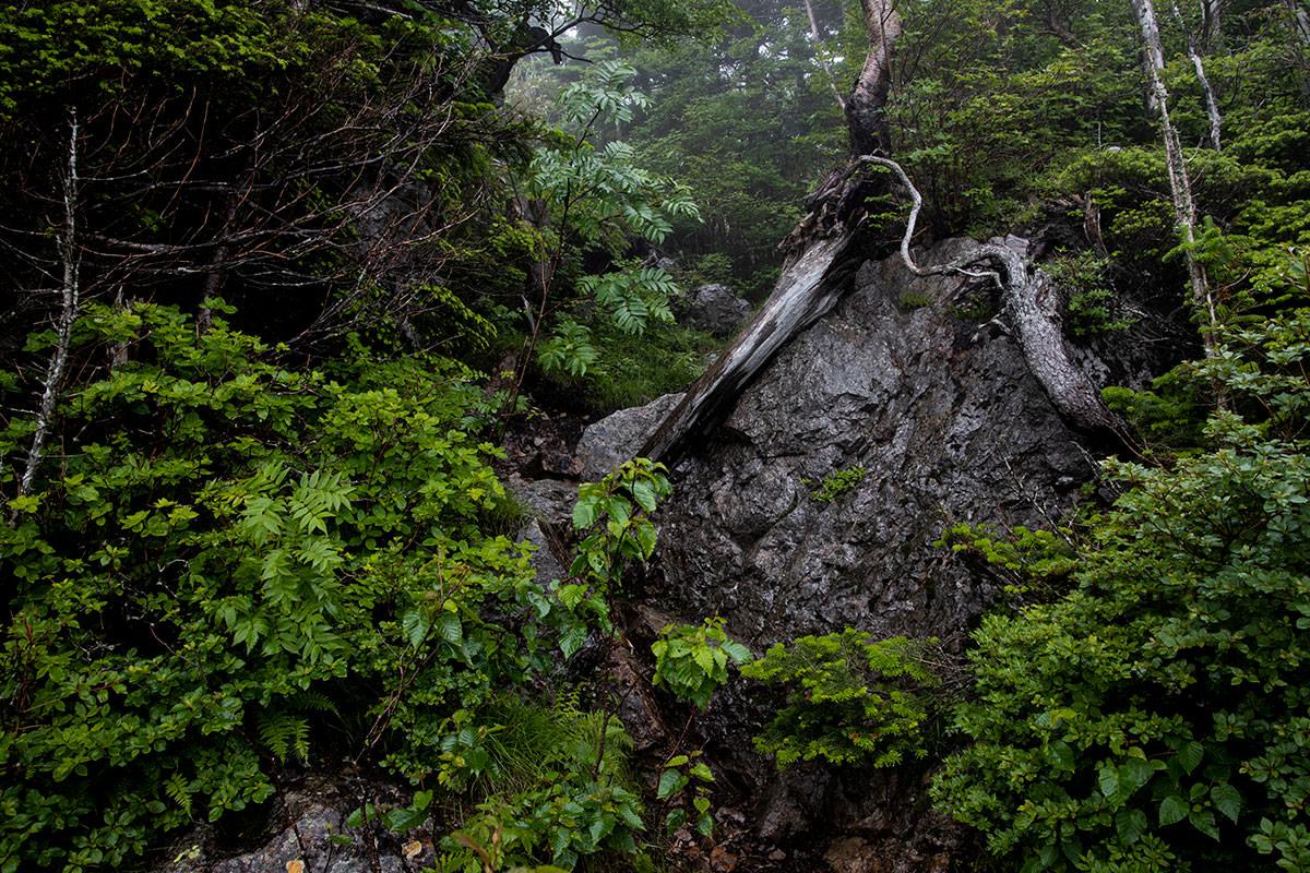 志賀高原赤石山-高い段差を越える
