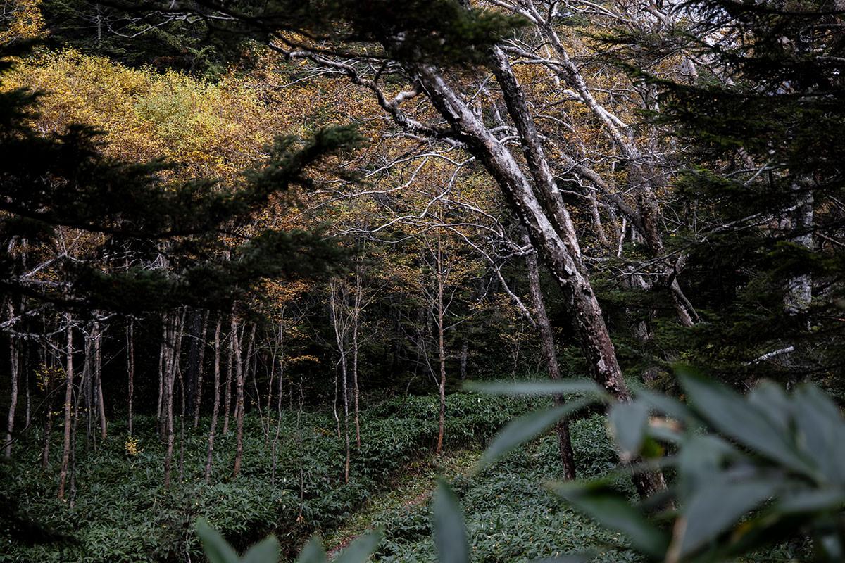 四十八池への道から、志賀山への道を見下ろす