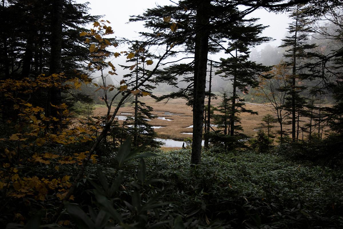 木の向こうに四十八池が見えた