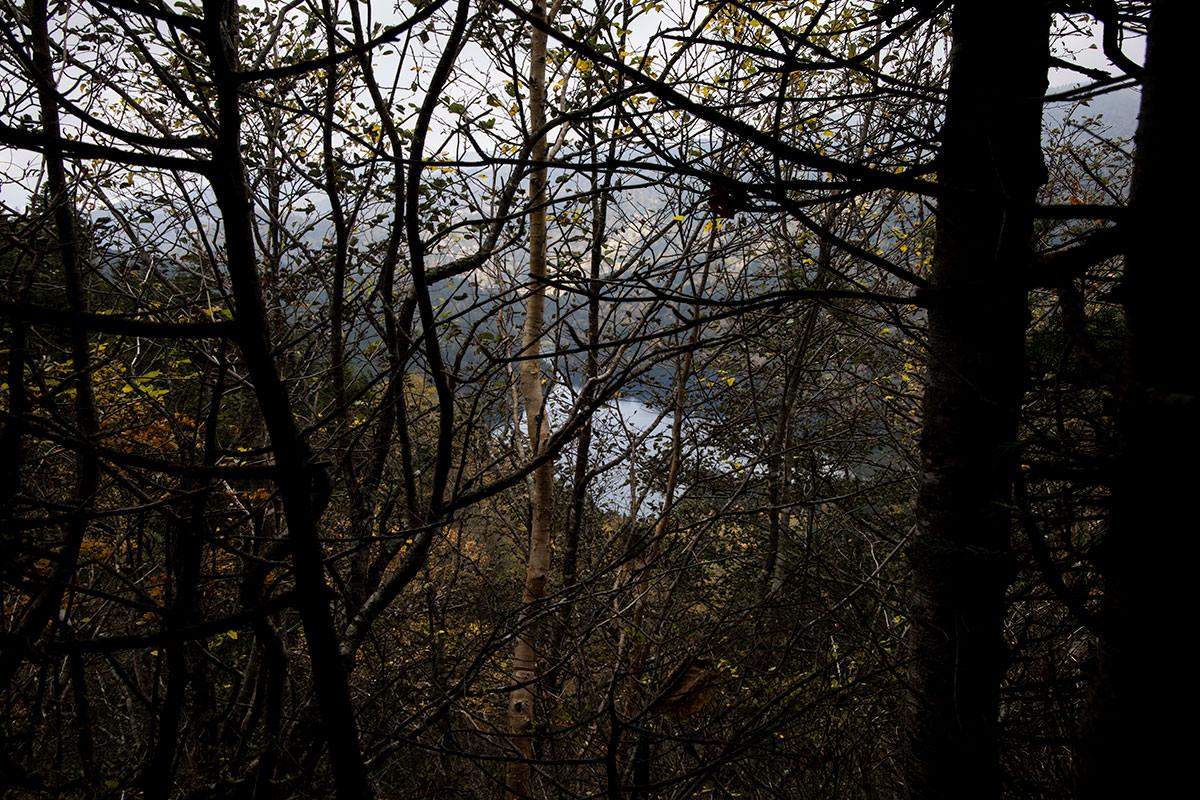 木の間から大沼池が見えた
