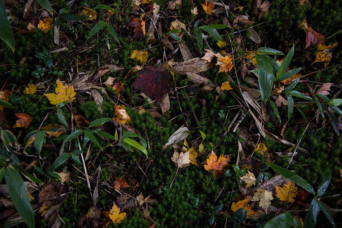 苔の間に落ち葉