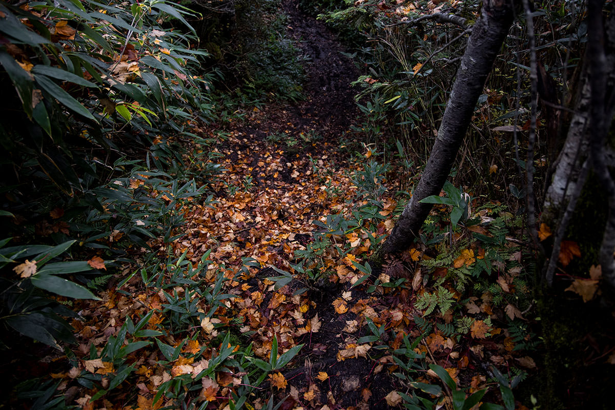 落ち葉の階段のような下り