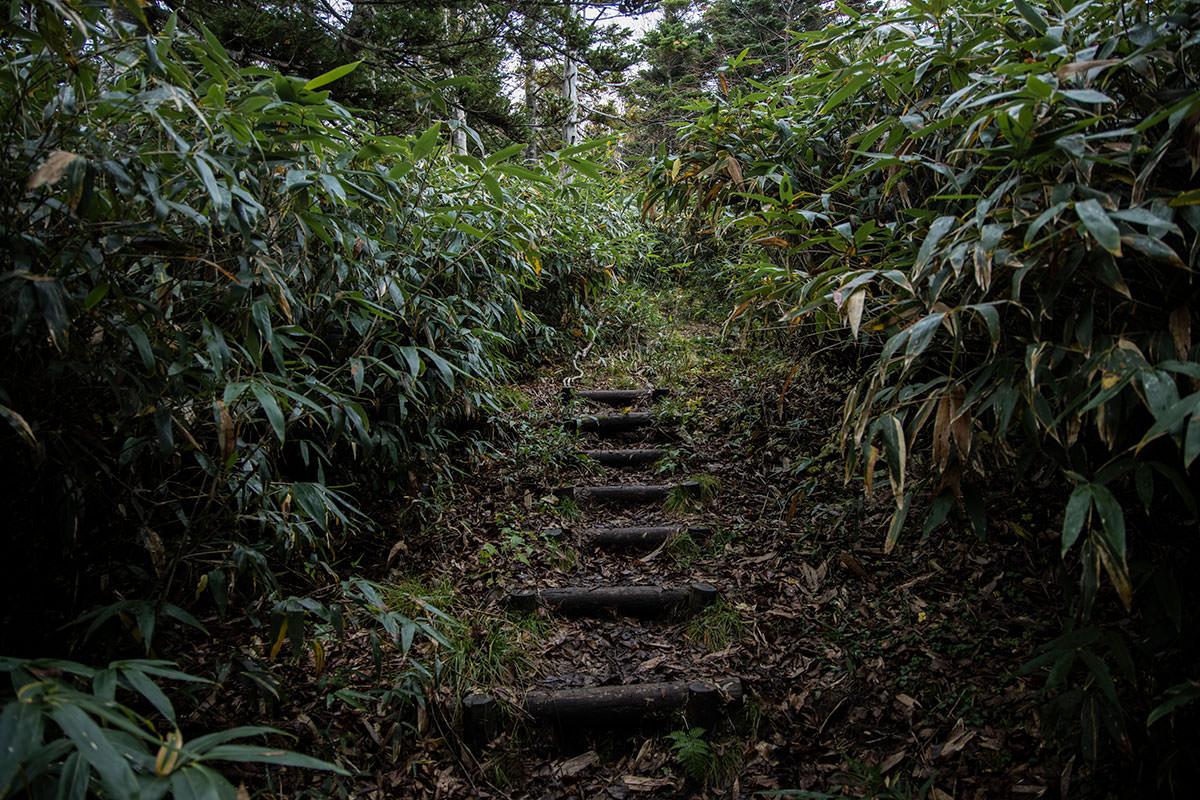 登りには階段もある