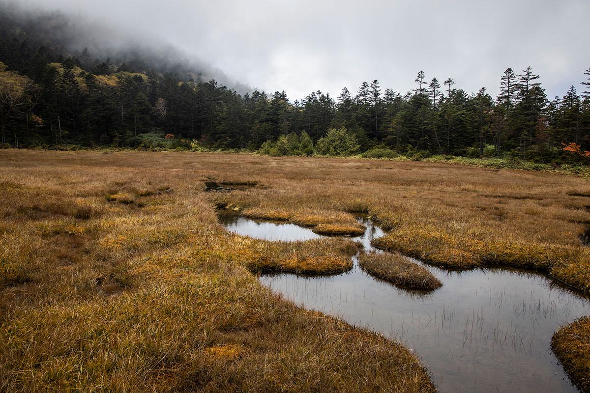 地塘がいっぱい