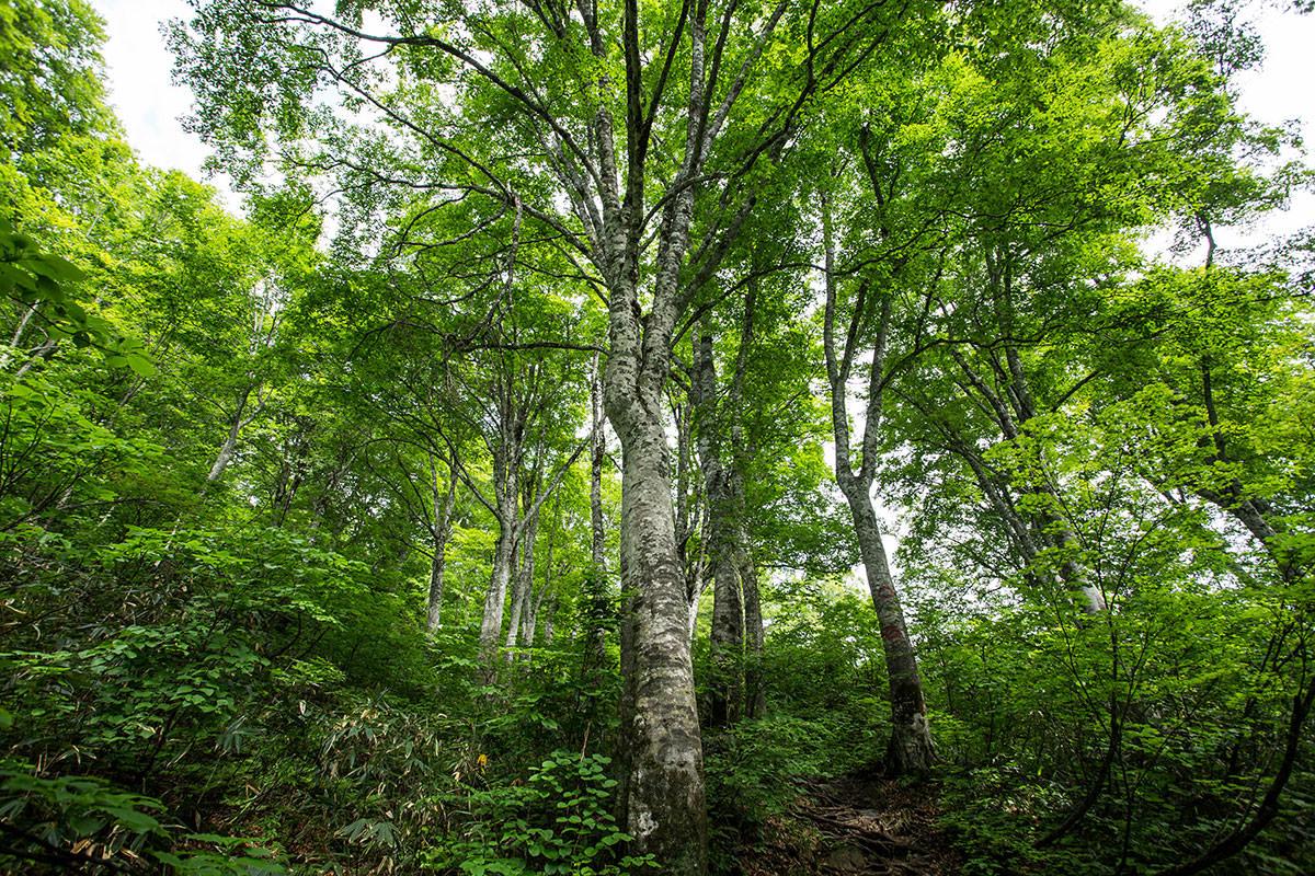 【雨飾山】登山百景-緑に囲まれる