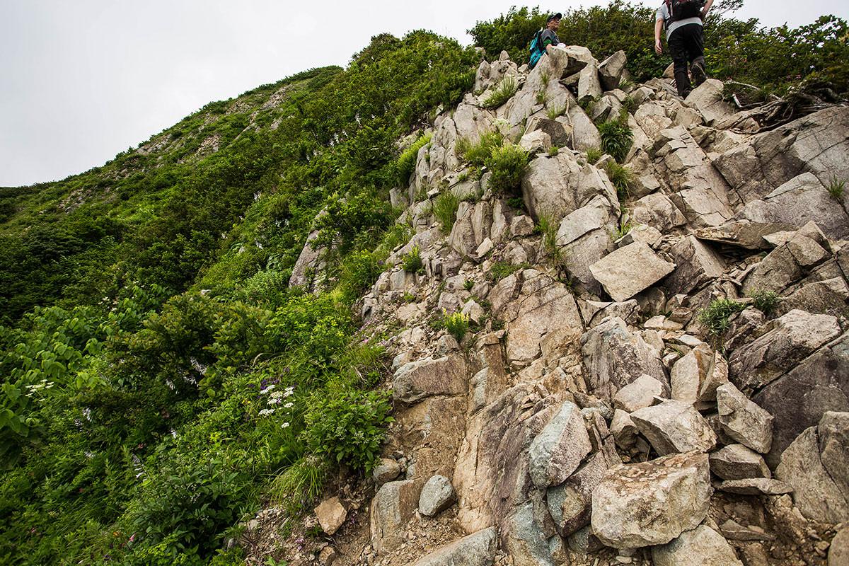 【雨飾山】登山百景-意外と花も多い