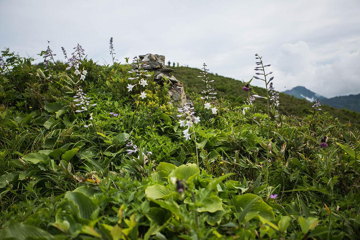 【雨飾山】登山百景-花があちこち