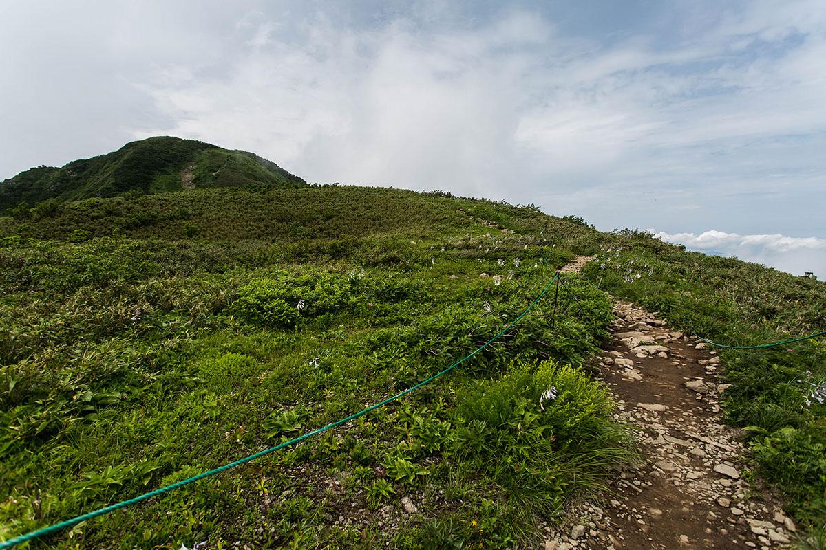 【雨飾山】登山百景-笹平に花いっぱい