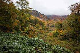 林道を歩いて登山口に着いた