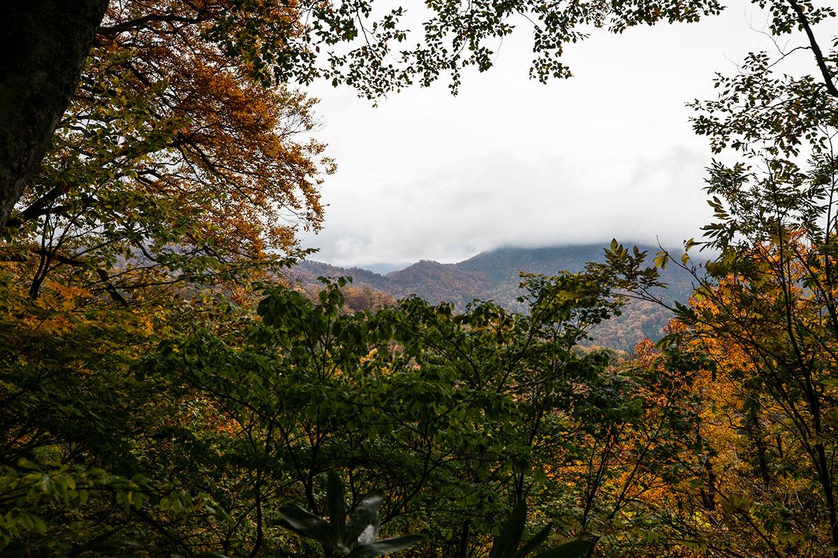 向こうの稜線は大渚山の登山口