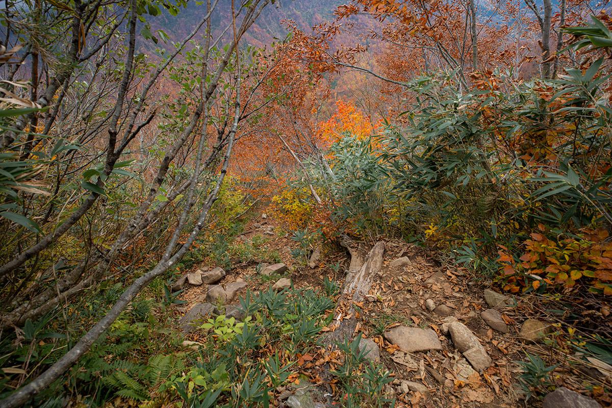 樹林帯に戻っても下りは急斜面
