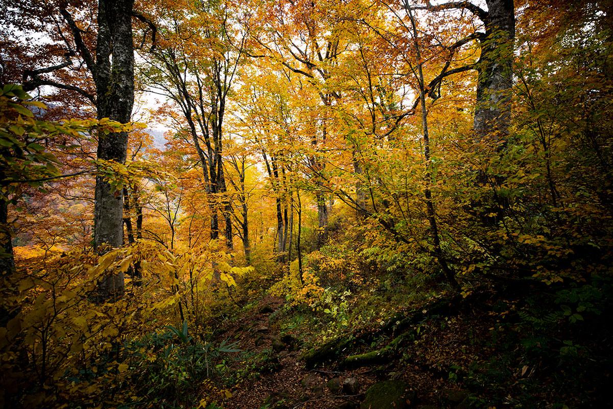 雨飾山のブナ林
