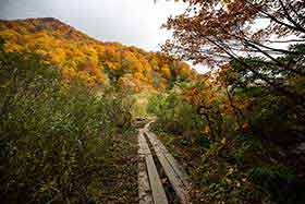キャンプ場が近づくと木道になる