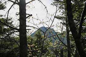 阿弥陀岳山頂がチラリ