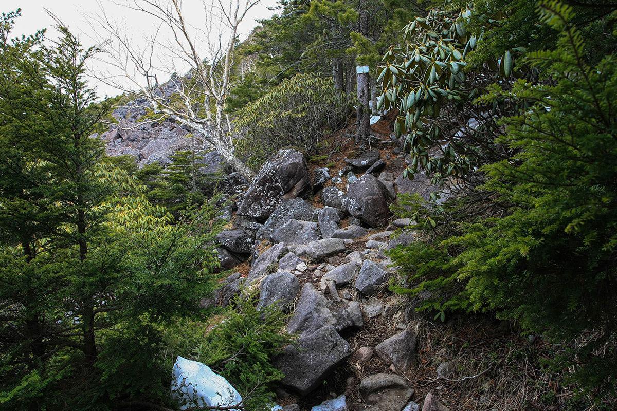 【編笠山 観音平】登山百景-枝の隙間は天候不良