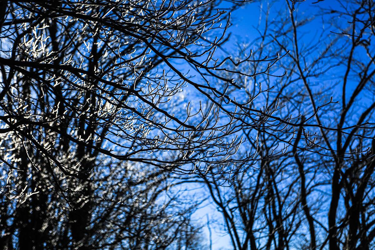 【荒船山】登山百景-霧氷
