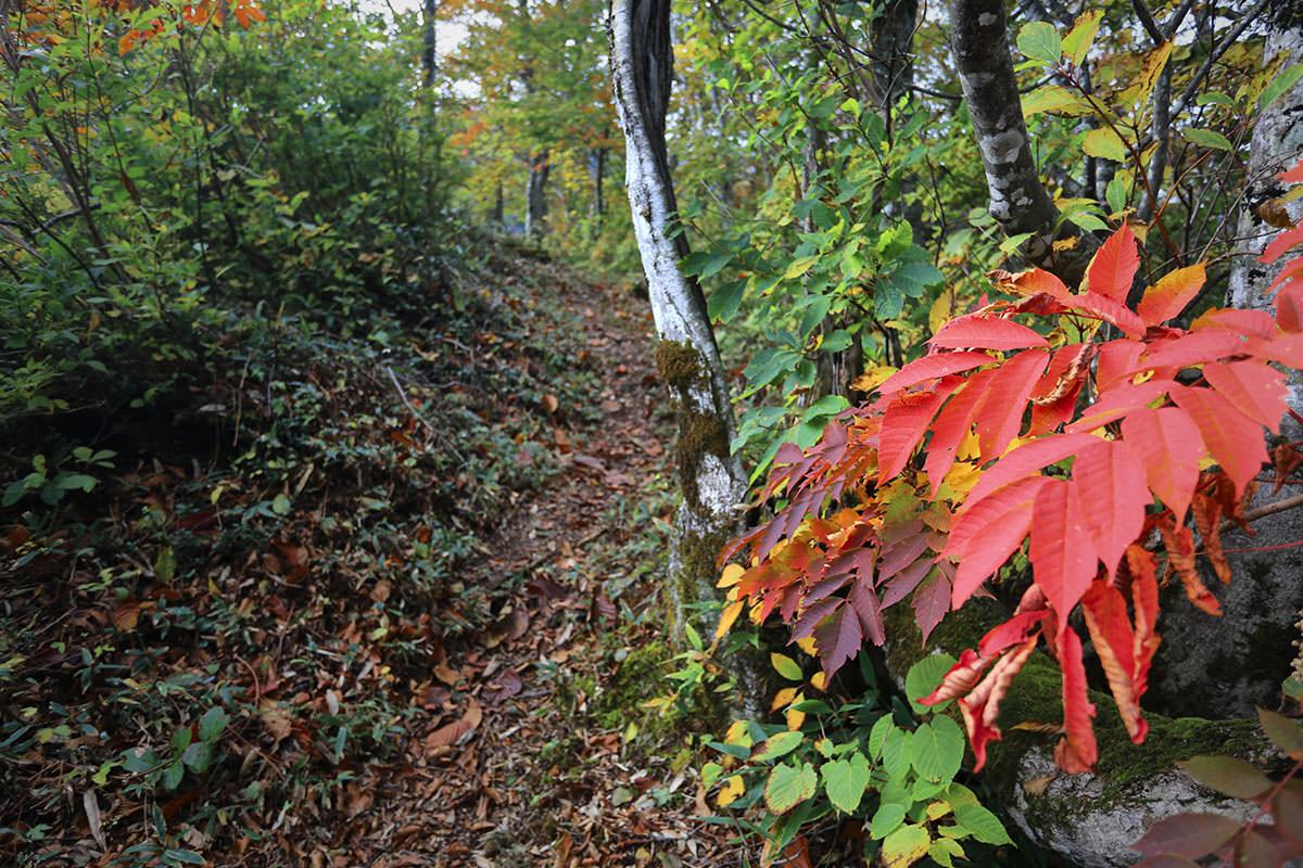 【荒沢岳】登山百景-赤い葉っぱ