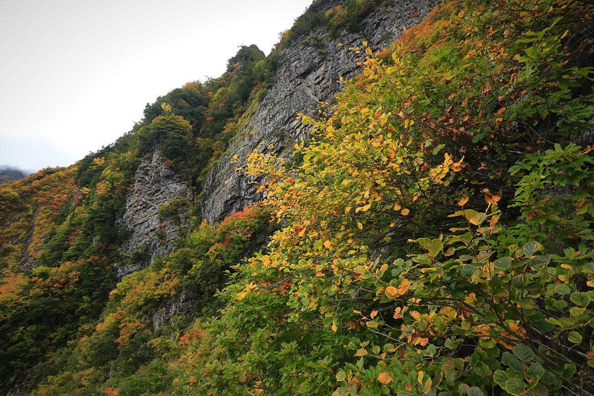 【荒沢岳】登山百景-見上げると岩壁