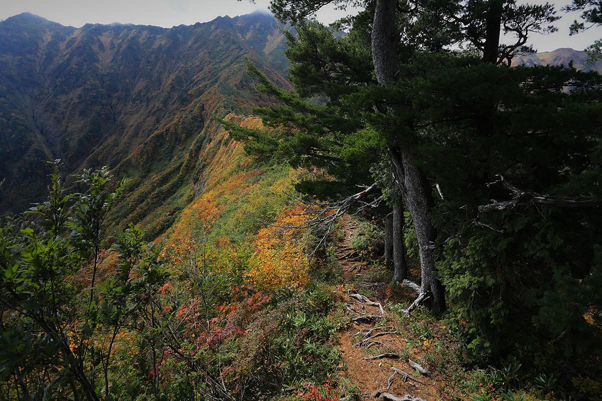 【荒沢岳】登山百景-この稜線を行く