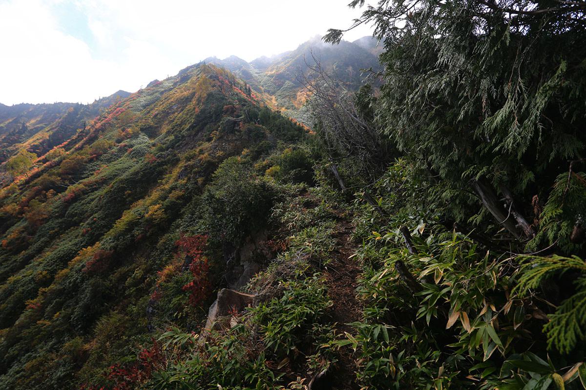 【荒沢岳】登山百景-稜線の急登開始
