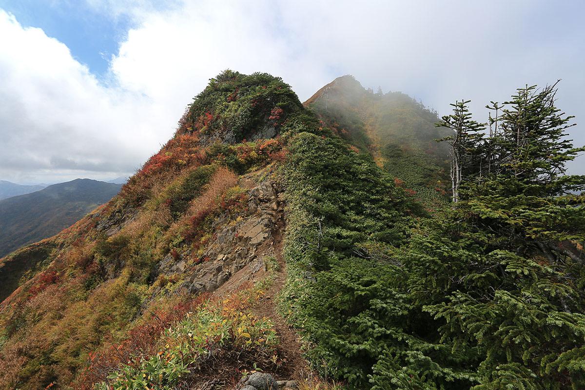 【荒沢岳】登山百景-尾根に出た