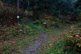 林道を渡る