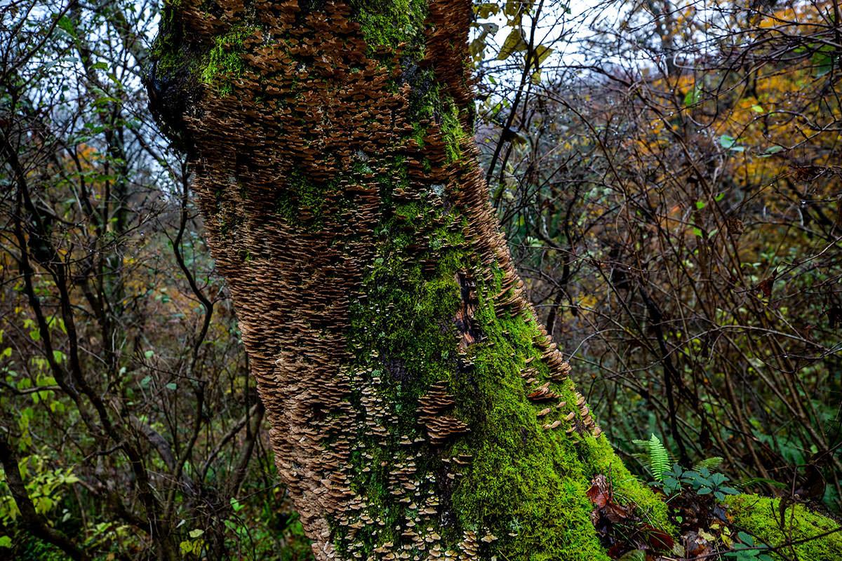 木にビッシリ生えてる