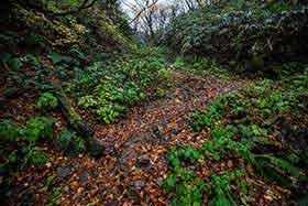 登山道は落ち葉がいっぱい