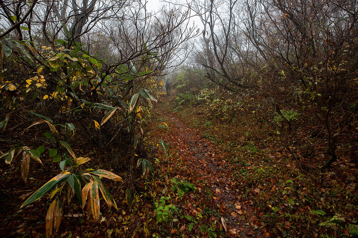 葉の落ちた木が多い