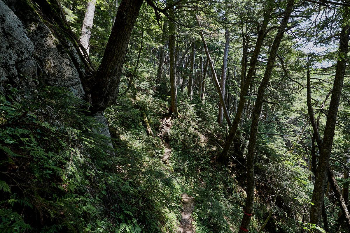 急登を過ぎると稜線が近づく