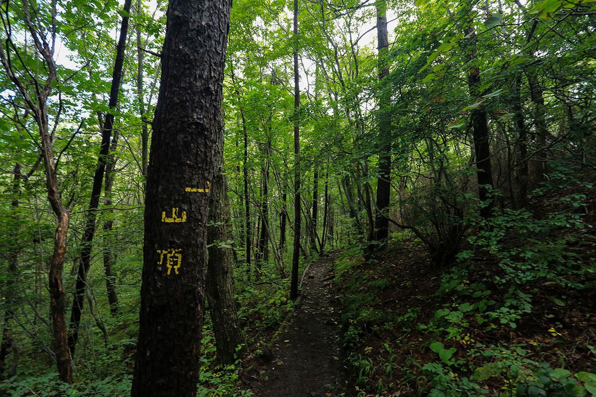 【浅間隠山】登山百景-印がいっぱい