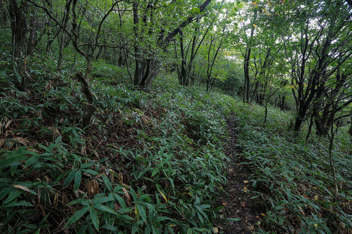 【浅間隠山】登山百景-右へ左へ登ってく
