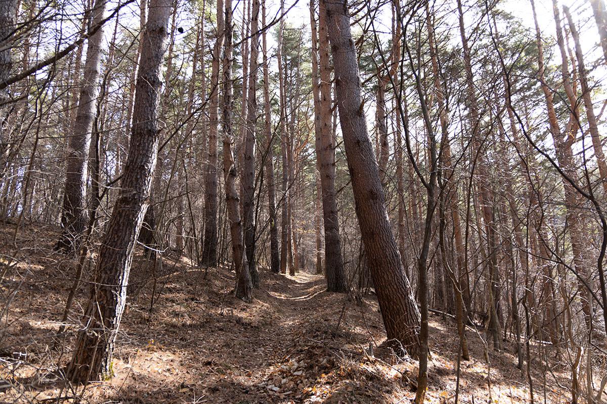 木の中を歩いていく