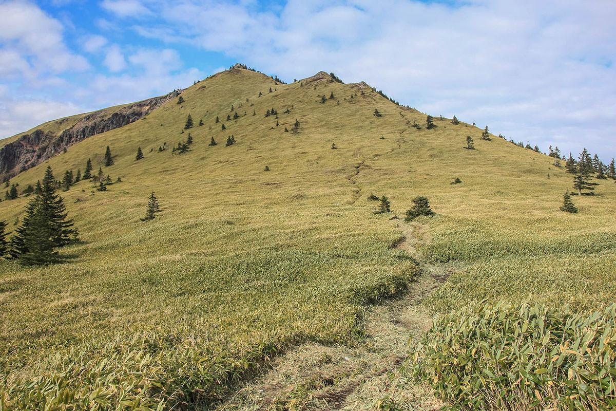 【四阿山】登山百景-笹だらけ
