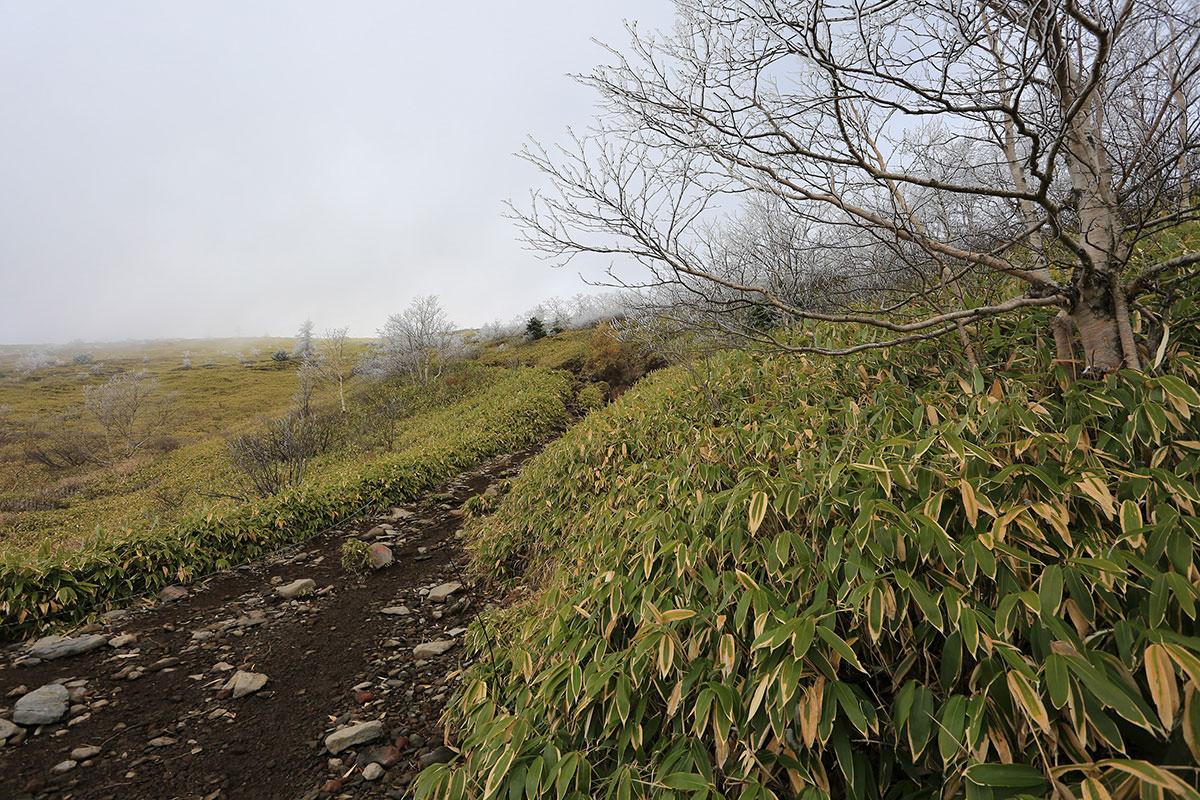 【四阿山】登山百景-ここから木が少ない