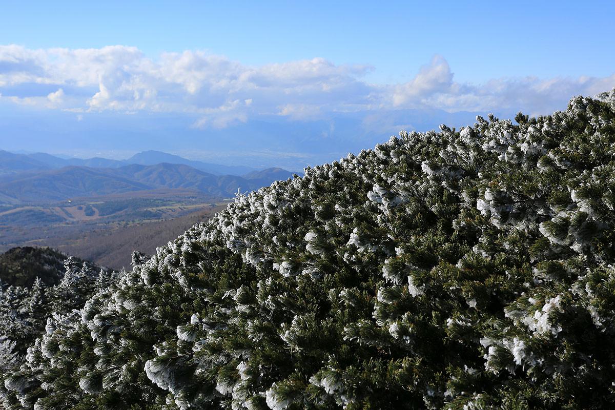 【四阿山】登山百景-ハイマツも凍る