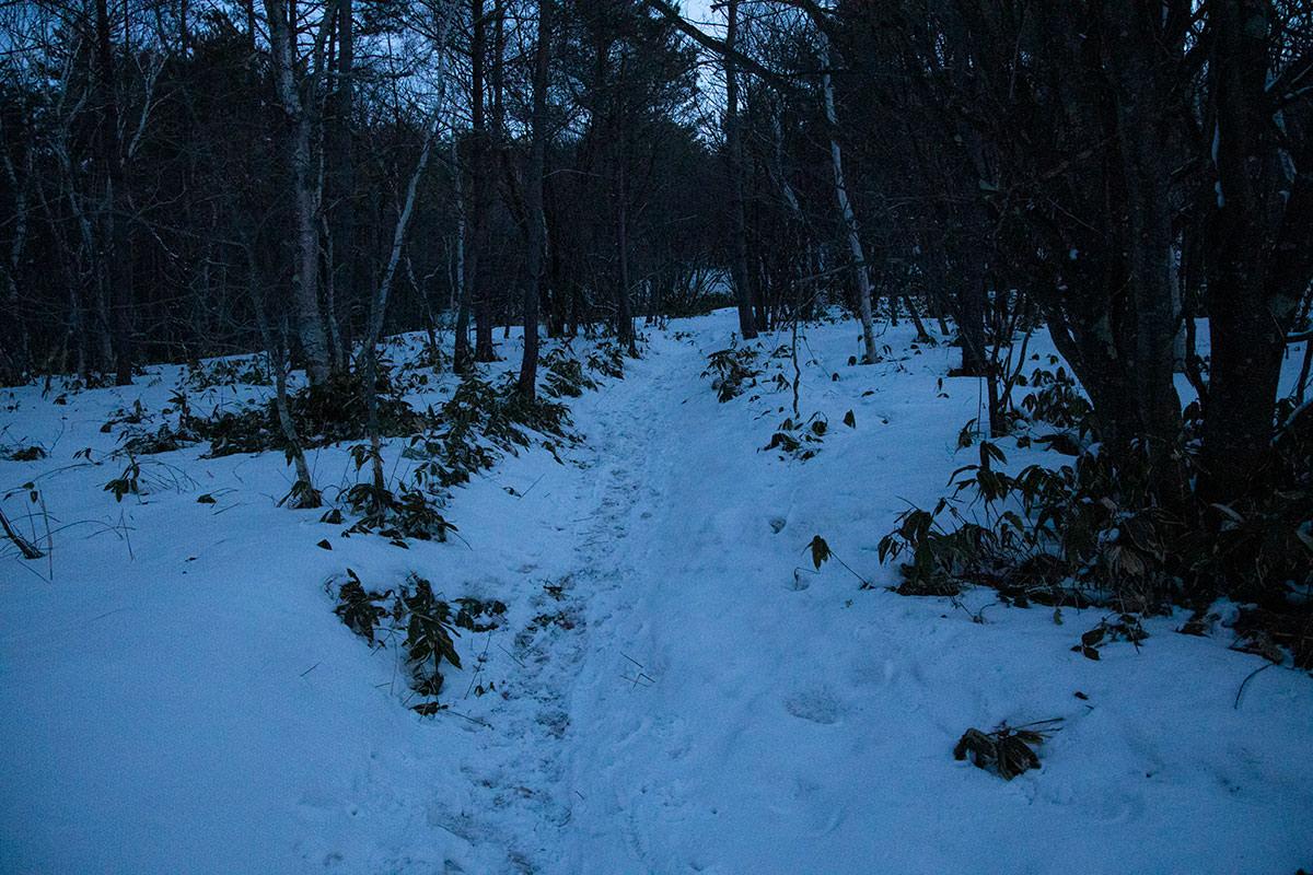 林道から登山道らしい道になった